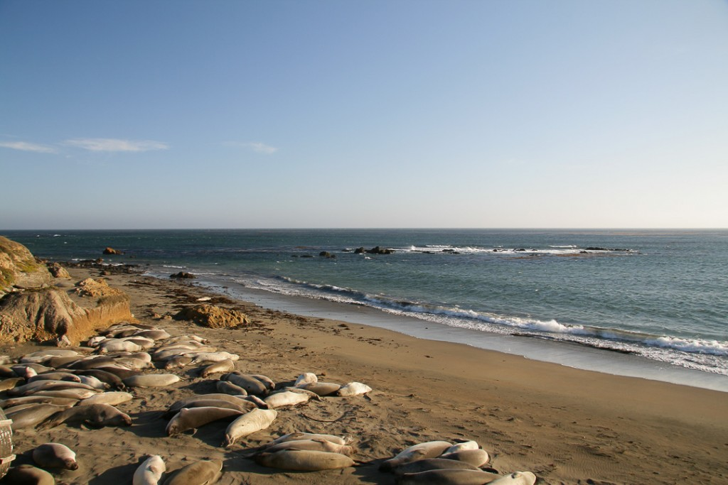 sealions highway one usa
