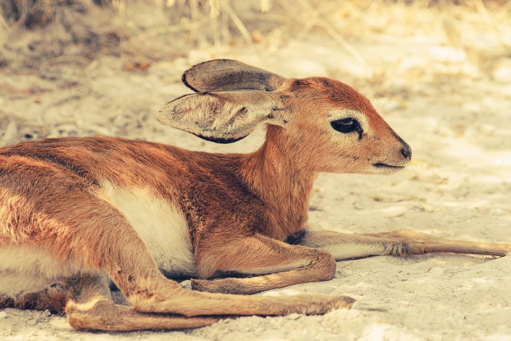 Afrika - wildlife - reisjournaal 2007 - Jannekes wereld - reizen