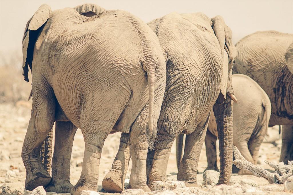 Namibië - Afrika - olifanten - reisjournaal 2007 - Jannekes wereld - reizen