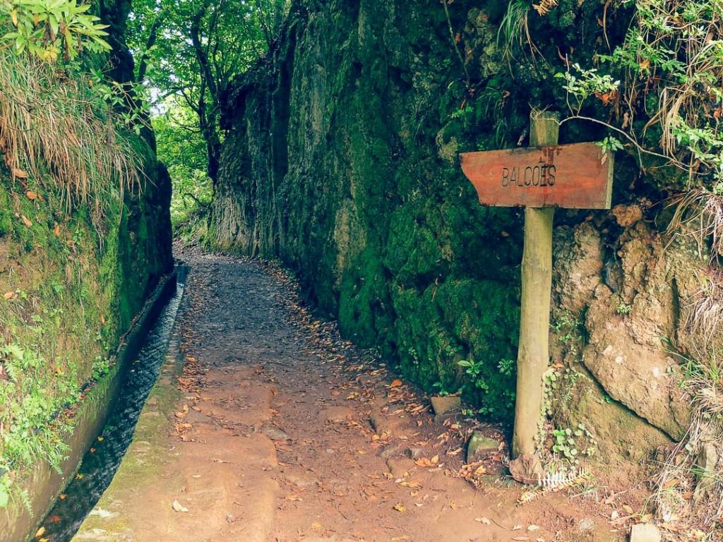 wandelen langs levada's madeira