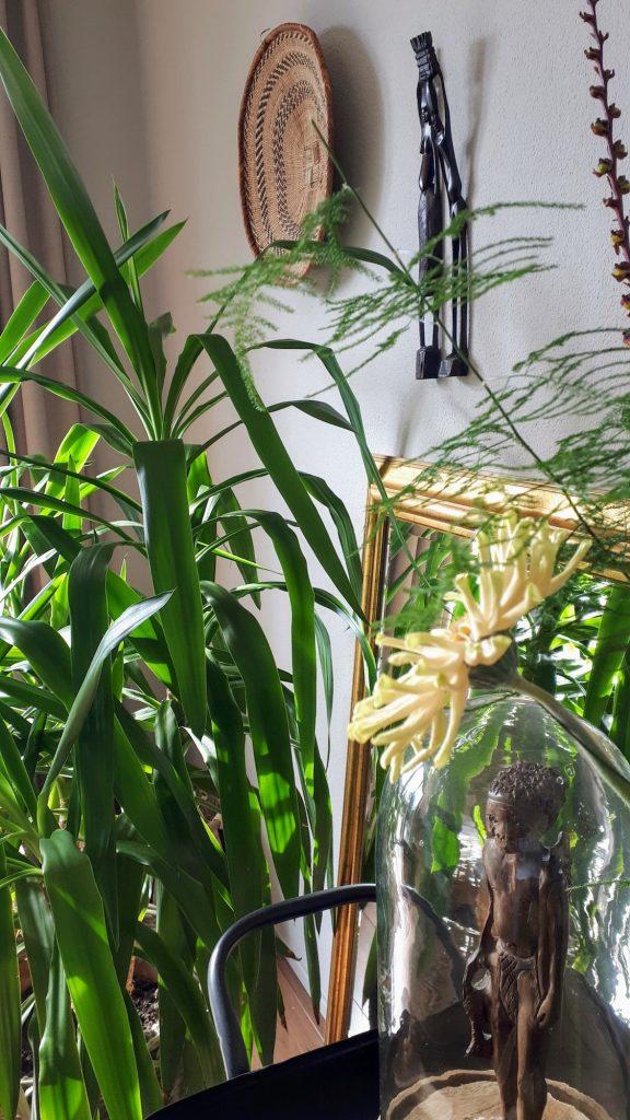 hilton carter - urban jungle - wonen in het groen